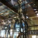 KBIN - Iguanodons