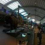 KBIN- Galerij van de evolutie